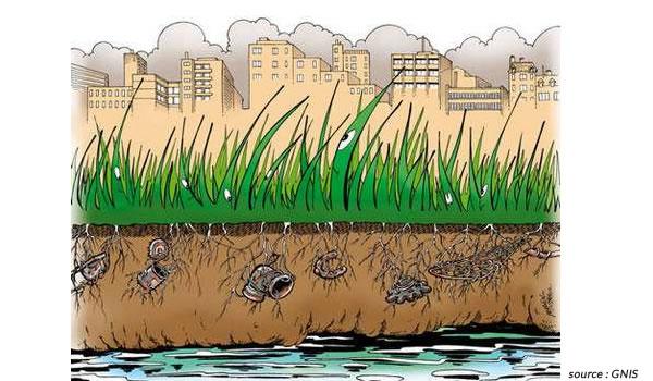 Dépollution des eaux pluviales par le gazon