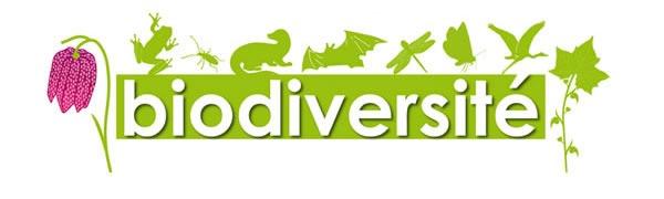 Loi Biodiversité pour la gestion des eaux pluviales