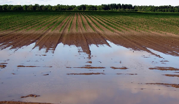 ruissellement agricole