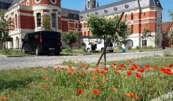 Parking végétalisé et biodiversité